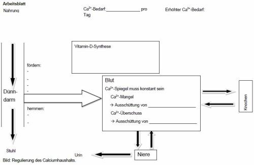 M12: Arbeitsauftrag und Arbeitsblatt zu Calcium