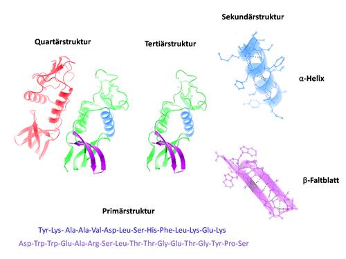 M3: Struktur von Proteinen