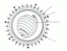 Virus Bau