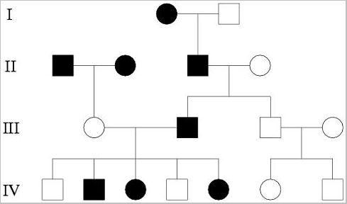 Stammbaumanalyse und Vererbungsmuster