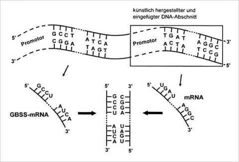 """Lernzirkel """"Gentechnik bei Pflanzen und Tieren"""""""