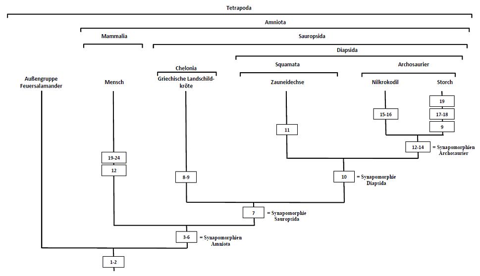 Stammbaumrekonstruktion