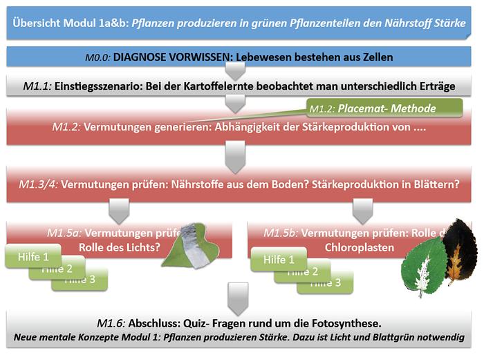 Modul 1a: Pflanzen produzieren in grünen Pflanzenteilen den ...