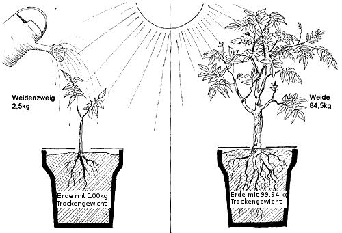 M1.3 Ernährung Tier / Pflanze