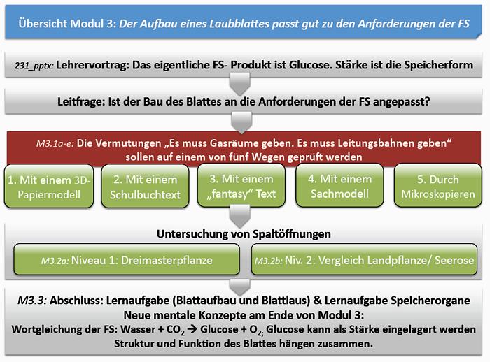 Modul 3: Der Aufbau eines Laubblattes passt gut zu den Anforderungen ...