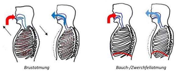 Bauch Und Brustatmung