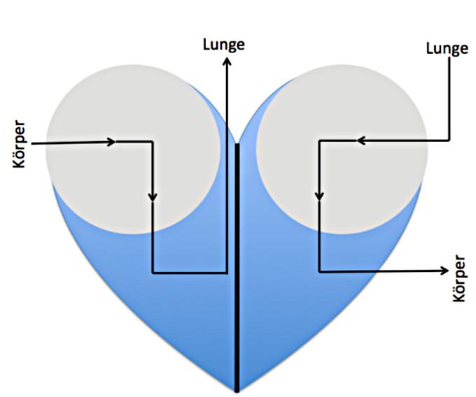 Darstellungen / Modelle des Herzens