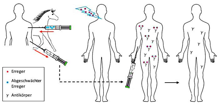 Aktive Immunisierung Abiblick De 1