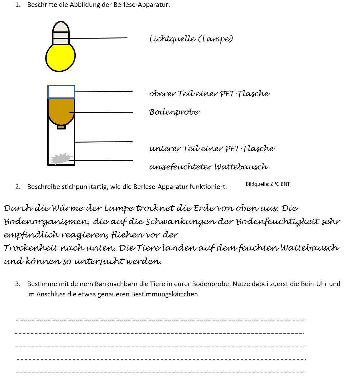 Arbeitsblatt 1 – Lösung