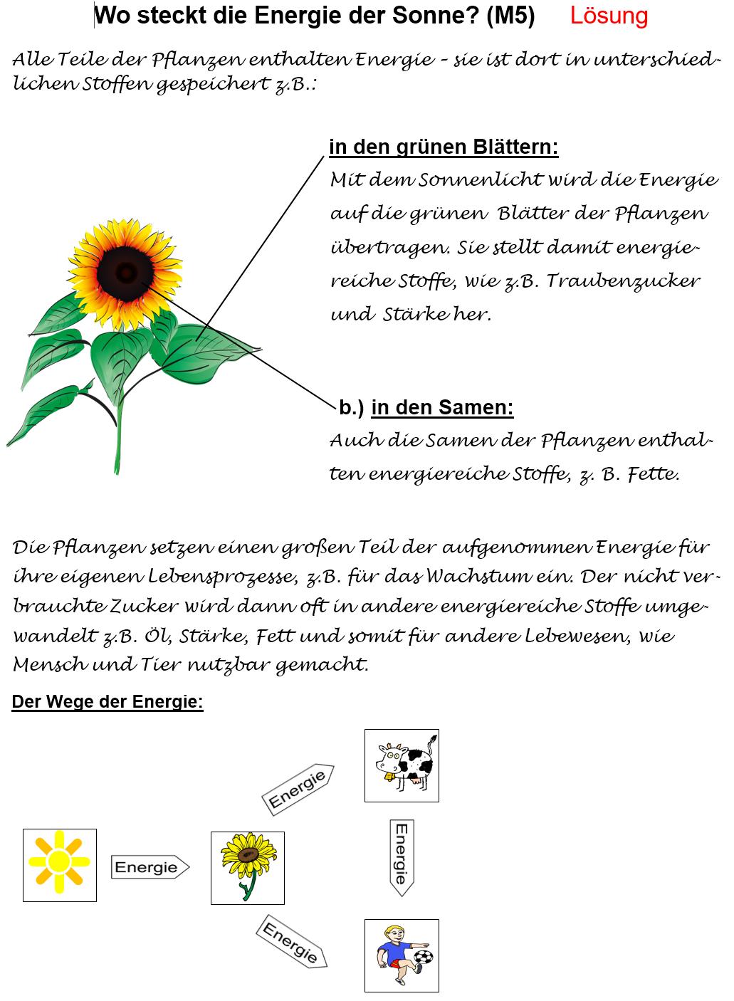 Arbeitsblatt - Wo steckt die Energie der Sonne? - Lösung