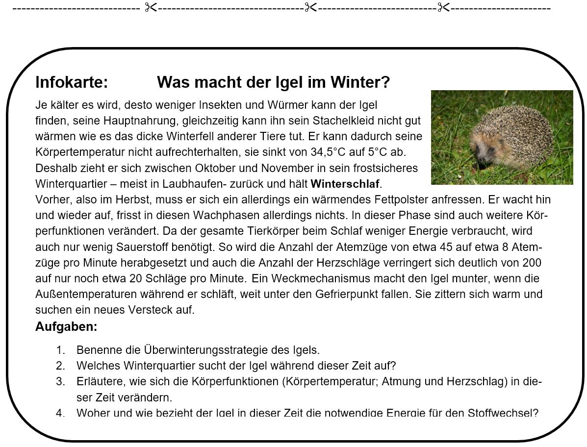 Infokarten Winterschlaf