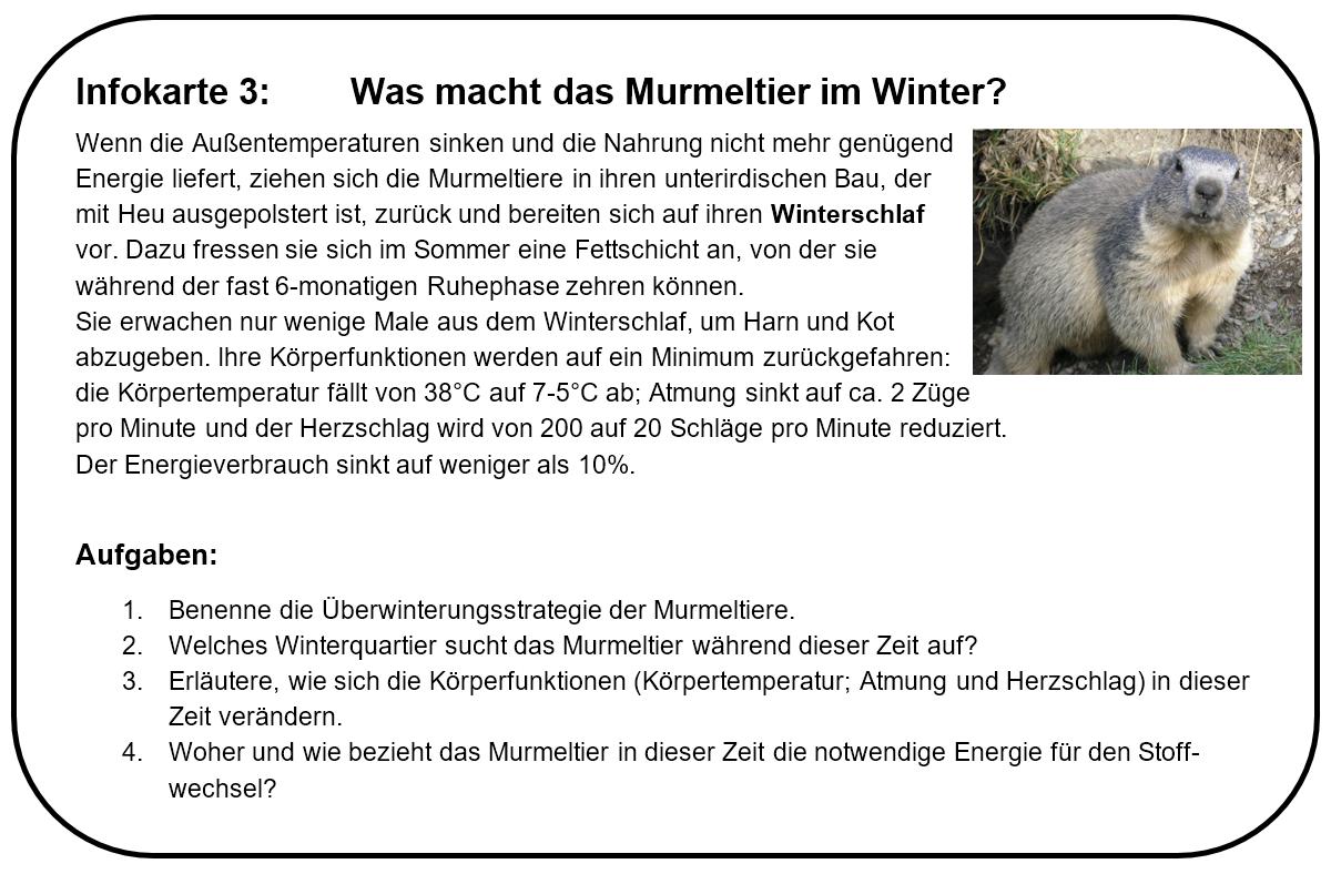 Großartig Murmeltier Zum Ausdrucken Ideen - Druckbare Malvorlagen ...
