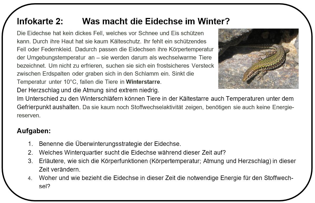 Tolle Eidechse Malblatt Galerie - Malvorlagen Von Tieren - ngadi.info