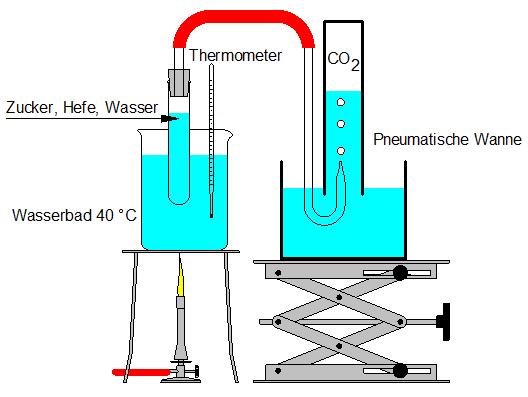 What Is Ethanol >> Alkoholische Gärung Lehrerarbeitsblatt